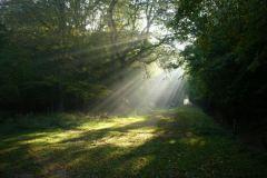 Hatfield-forest-Woodlife-trails